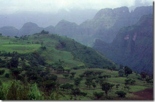 Acacia- Simien mountains
