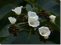 Wanza flowers